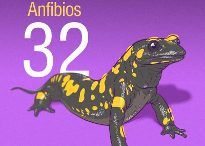 32-Anfibios