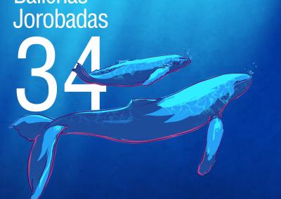 34-Ballenas-Jorobadas