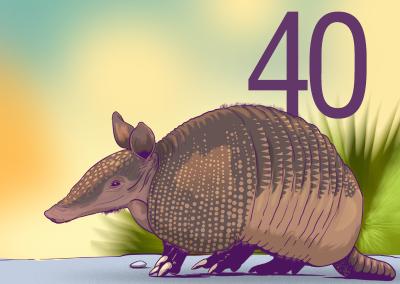 40-Mamiferos