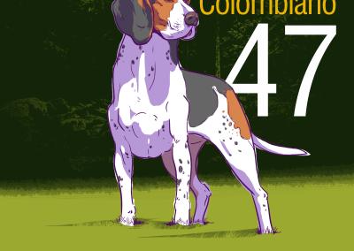 47-Sabueso-Colombiano