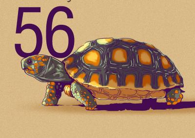 56-Morrocoy